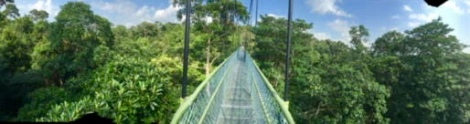 treetop-bridge